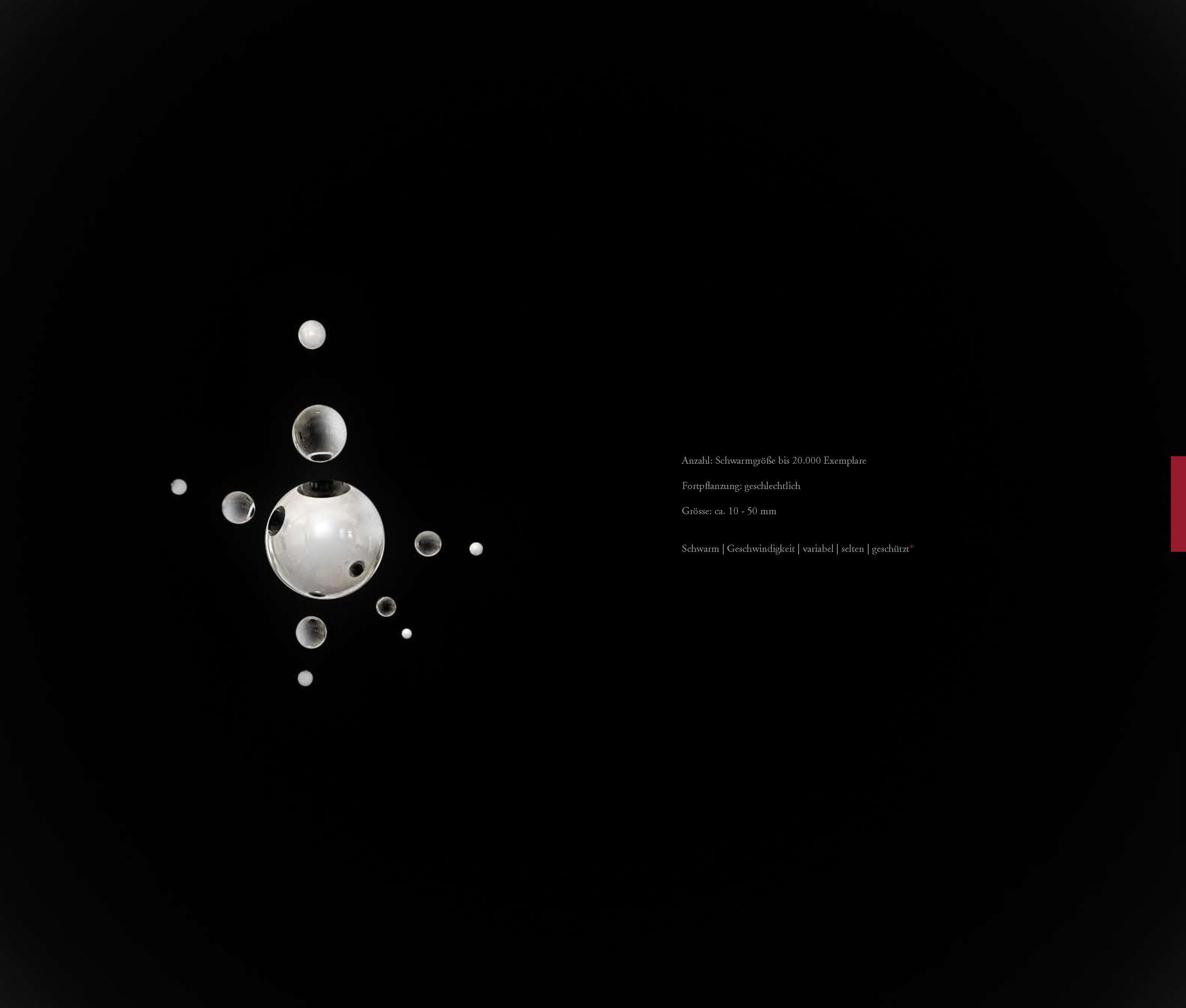 DIE_ART_DAS_BUCH_Seite_75